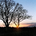 03 Sunset over Dundrum Bay, Co. Down, through tree