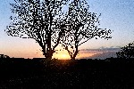 04 Sunset - Dundrum Bay, Co. Down, through trees 2